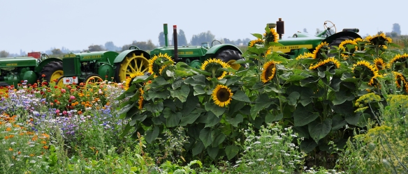 sunflowerpanorama&tractor7x3watermark